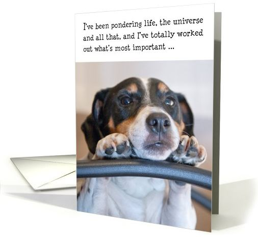 FireShot Screen Capture #518 - 'Birthday Card - Humorous Dog Pondering Life card (845046)' - www_greetingcarduniverse_com_humor-birthday-cards_birthday-card-humorous-dog-845046