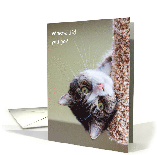 Thinking of You at College from Pet Cat Humor card (1447366) 2016-08-25 15-43-24